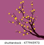 yellow apricot flower ... | Shutterstock .eps vector #477945973