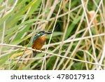 kingfisher | Shutterstock . vector #478017913