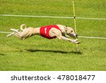 Light Colored Greyhound Racing