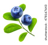 isolated blueberries. two... | Shutterstock . vector #478167643