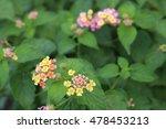 life begins in a garden. | Shutterstock . vector #478453213