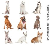 Set Of Common Dogs Of Differen...