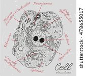 beautiful handdrawn cell... | Shutterstock .eps vector #478655017