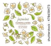jasmine flowers vector set on... | Shutterstock .eps vector #478658473