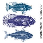 set of vector fishes  different ... | Shutterstock .eps vector #478802917