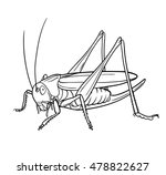 Grasshopper  Graphic Vector.