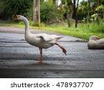 Goose Is Dancing In The Street
