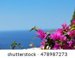 typical greek colorful garden... | Shutterstock . vector #478987273