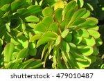 green plant 1 | Shutterstock . vector #479010487