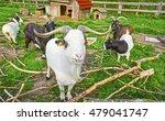 Long Horned Goat Squad
