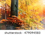 Autumn Landscape With Forest...