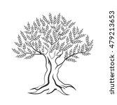 olive tree outline silhouette... | Shutterstock .eps vector #479213653