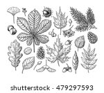 Autumn Vector Set With Leaves ...