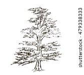 hand drawn cedar isolated on... | Shutterstock .eps vector #479338333
