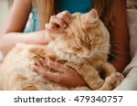 Stock photo close up shot big ginger furry cat on the child s knees 479340757