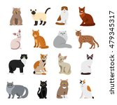Stock vector cat breeds cute pet animal set vector illustration 479345317