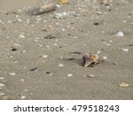 sea shell on the beach | Shutterstock . vector #479518243