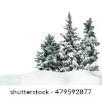 Fir Trees With Snow On...