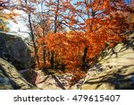 beautiful landscape  colorful... | Shutterstock . vector #479615407