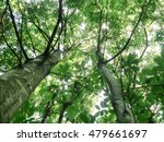 Looking Up Into The Canopy....