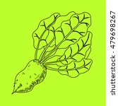 mangelwurzel  a root vegetable  ... | Shutterstock . vector #479698267