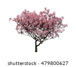 trees isolated collection 3d... | Shutterstock . vector #479800627