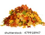 pile of autumn maple colored... | Shutterstock . vector #479918947