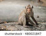 monkey sits on the stone and... | Shutterstock . vector #480021847