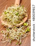 Small photo of Fresh alfalfa and radish sprouts on wooden scoop lying on wooden table, healthy lifestyle diet food and nutrition