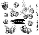 vector raspberries hand drawn... | Shutterstock .eps vector #480116503