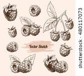 vector raspberries hand drawn... | Shutterstock .eps vector #480117073