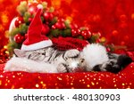 Stock photo sleeping christmas kitten 480130903