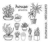 illustration of houseplants ... | Shutterstock .eps vector #480166693