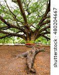Roots Of An Old Tree  Tree Wit...