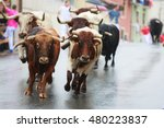 Bulls Are Running In Street...