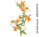 watercolor yellow flowers | Shutterstock . vector #480254413
