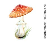 Watercolor  Fly Agaric...