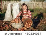 the children dig up the potato... | Shutterstock . vector #480334087