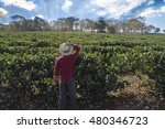 farmer with hat looking the...   Shutterstock . vector #480346723