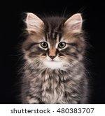 cute fluffy siberian kitten... | Shutterstock . vector #480383707