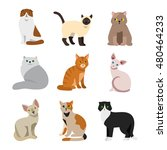 cat breeds cute pet animal set... | Shutterstock .eps vector #480464233