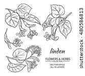 linden vector set | Shutterstock .eps vector #480586813