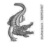 Crocodile  Alligator Or Animal...