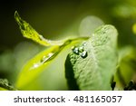 green leaves on a bed of green... | Shutterstock . vector #481165057