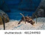 The Spotted Garden Eel In...