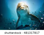 Dolphin Underwater On Reef...