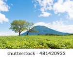 mt yotei and tree of cherry...   Shutterstock . vector #481420933
