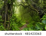 asian tropical jungle | Shutterstock . vector #481423363