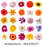 Stock photo set of seasonal spring flowers 481428127