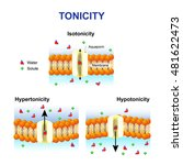 tonicity and osmosis. cell... | Shutterstock .eps vector #481622473